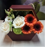 Cutie Colorful Boxes (Dark Red)